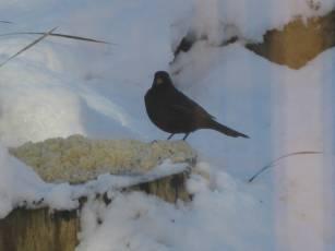 January in Harrogate-2-2010 012