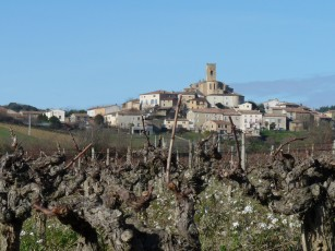 Another view of Villelongue, glimpsed throughg more vines