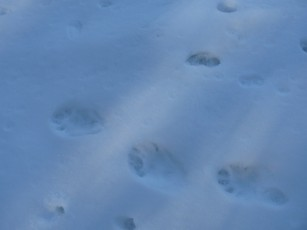 We liked pretending large doggy prints were marauding bears