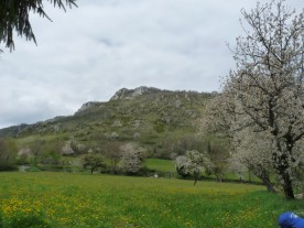 Our daffodils were there, up on the top.