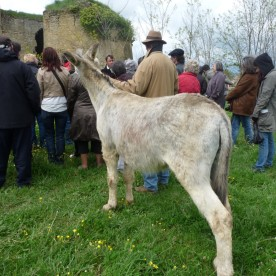 Fabrice Chambon's interested audience includes Sarko the donkey.