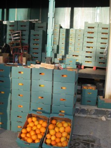 There we are:  A container load of oranges.  All I have to do is ask for a box....