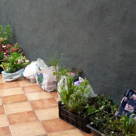 Plant swap time.