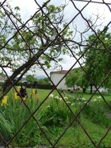 A garden down the road