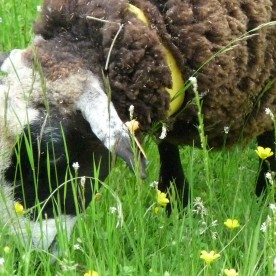 A flower-strewn meadow to you is a tasty salad to a sheep.