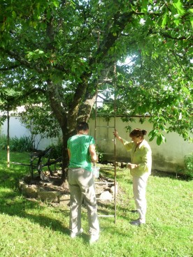 A tree. A ladder. Christine and I discuss a picking strategy