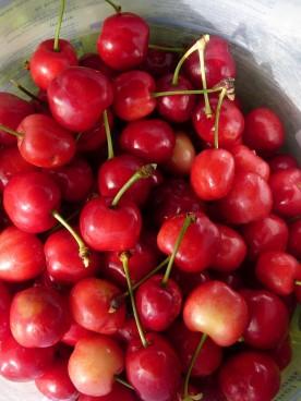 Good cherries.