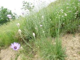 Meadow flowers on the walk
