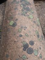 And lichen.