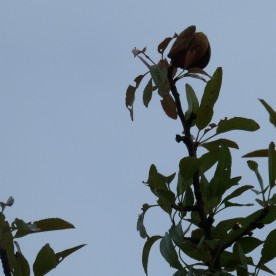 A solitary almond