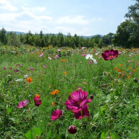 A flowery meadow greets you...