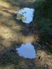 We passd a few fords: here's a puddle