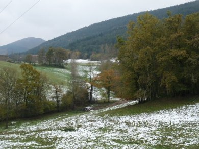 Snow, with autumn leaves still on the trees