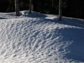 Sun-stipples snow