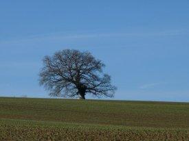 Midwinter tree.