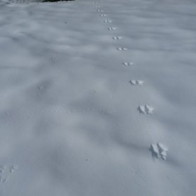 Can you see 3 different sets of animal tracks?