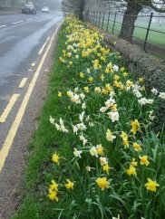 A roadside at Ripley, North Yorkshire.