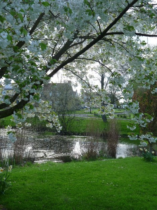 One of North Stainley's village ponds.