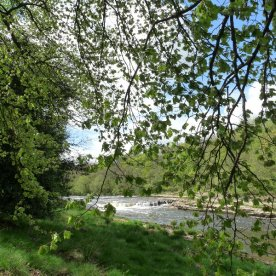 The River Ure at Aysgarth.