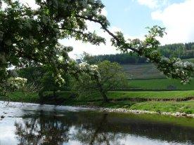 Here's the River Wharfe.