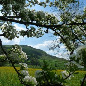 A view glimpsed through the hawthorn blossom.