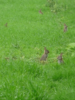 .... and the rabbits are - breeding like rabbits.