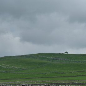 Dry stone walls, a lonely tree.