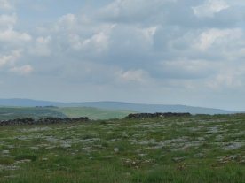 More limestone pavement.