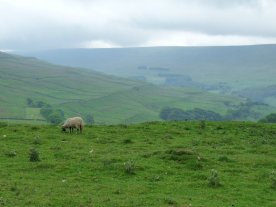 Only sheep for several miles.