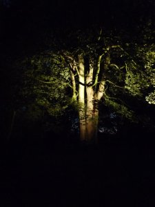 Another woodland glade.