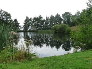 One of the several fishponds.