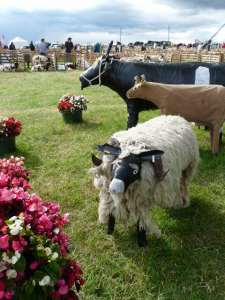 At Wensleydale Show, Leyburn Auction Mart went for animals made from  gaffer tape and oddments.  So much more biddable.