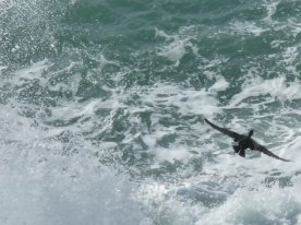 This cormorant almost got away before I got my camera out.