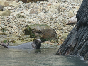 Grey seal on a beach at Ramsay Island