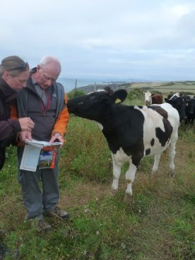 Not wildlife exactly: but these young steers were awfully keen to help Sarah and Brian out with the map-reading.