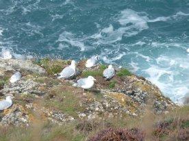 Herring gulls taking a break