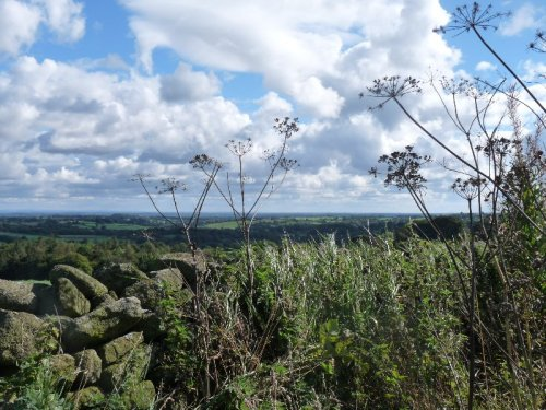 The landscape glimpsed through the skeletons of summer's cow parsley.
