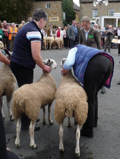 Judgment day at Masham Sheep Fair