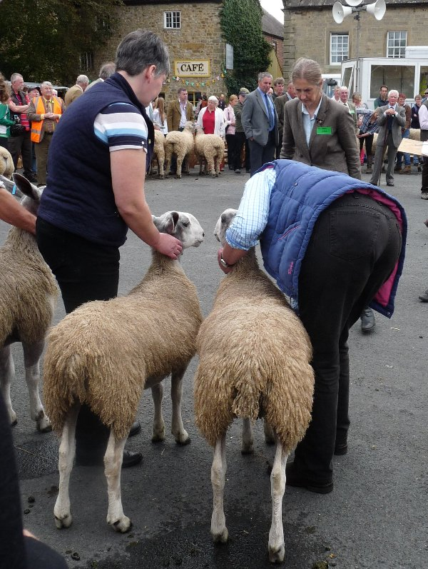 Judgment day at Masham Sheep Fair