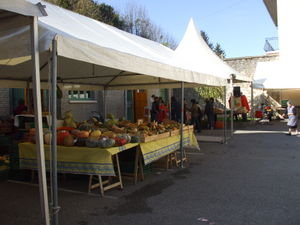 Pumpkin stall: most of these were grown by just one man