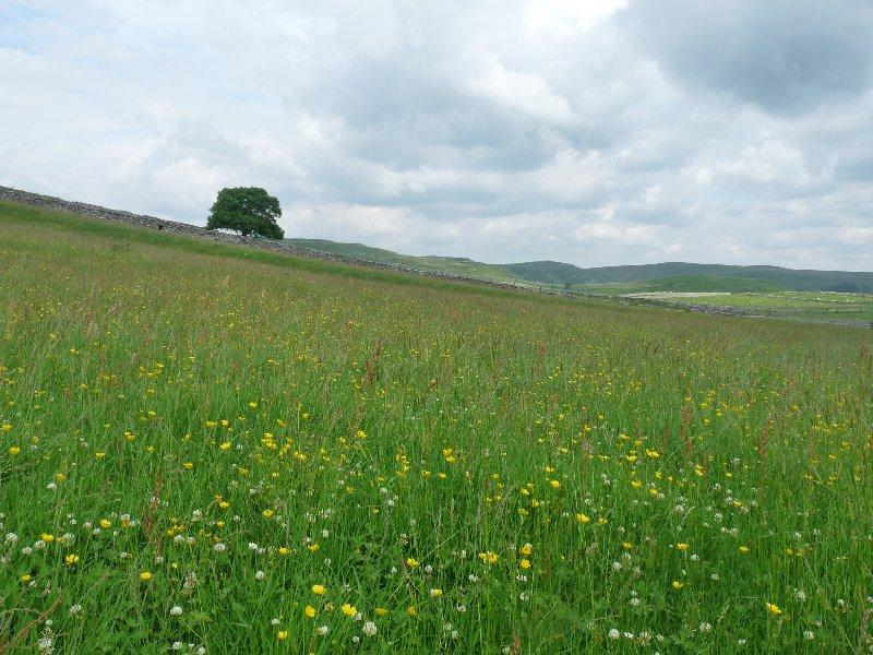 Near Malham Tarn.