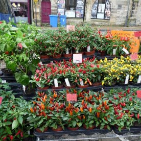 Chillies for sale.