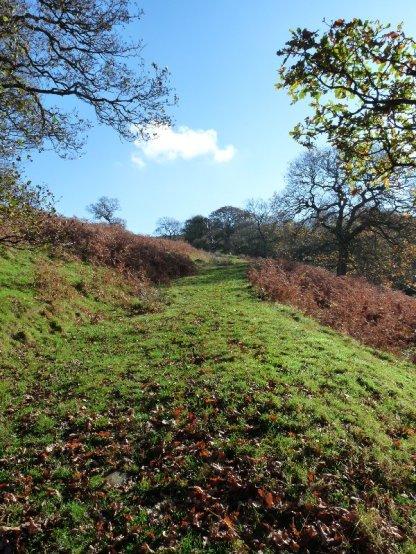 A grassy path.