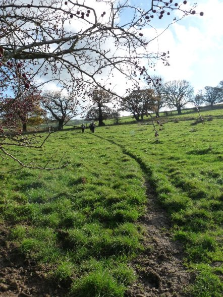 A path through a field.