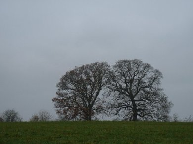A graceful pair of winter trees