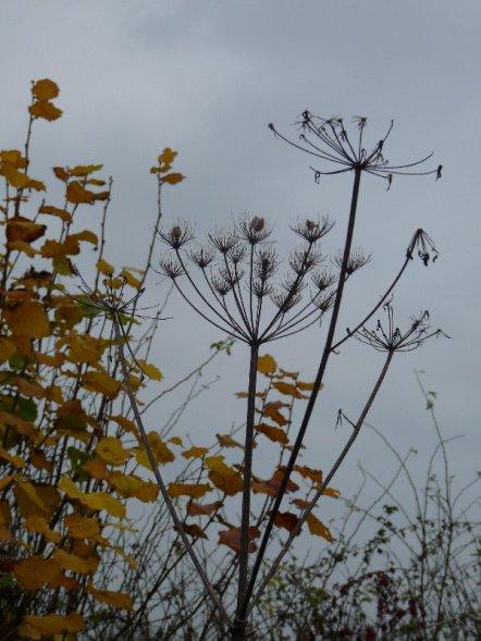 Winter seed heads