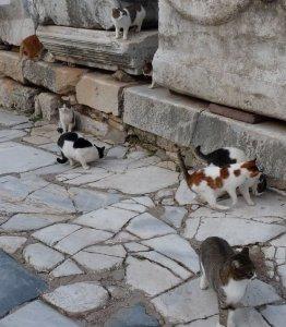 Ephesus cats.
