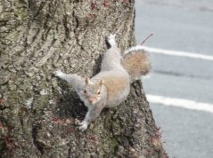 I know grey squirrels are no better than rats with tails, but they still cheer me up as they scurry up and down trees.