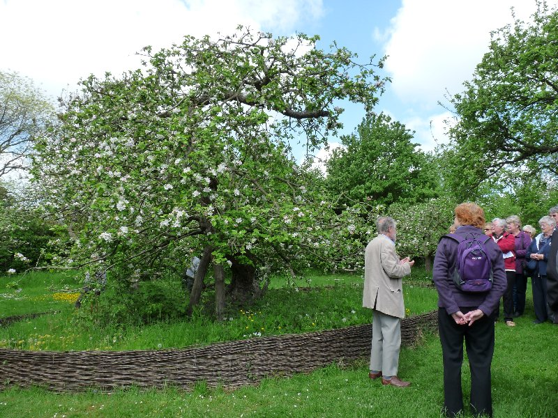We gather round That Apple Tree to hear its story.