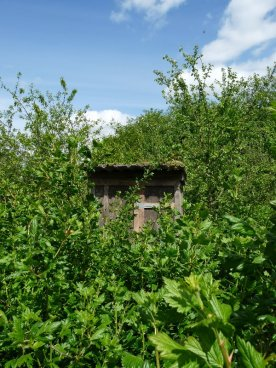 Garden sheds hide among the foliage.